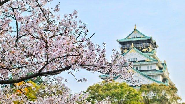 Kirschblüte in japanischem Garten Wien