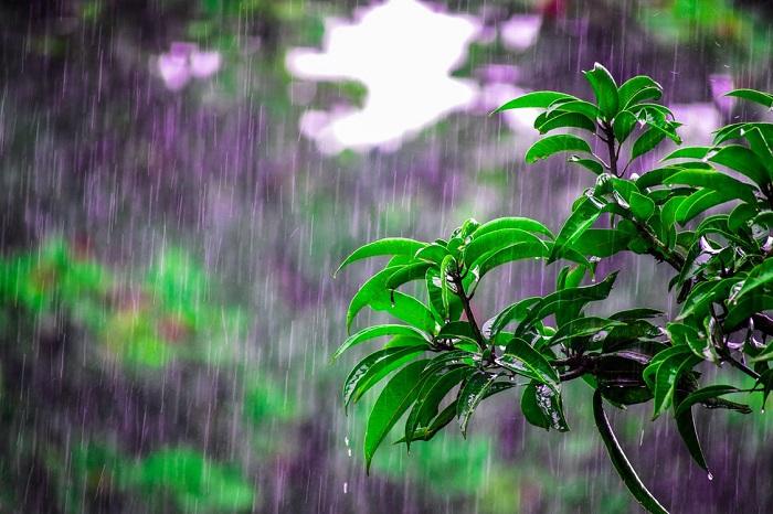 MonsunWechsel zwischen enormen Niederschlägen und extremer Trockenheit.