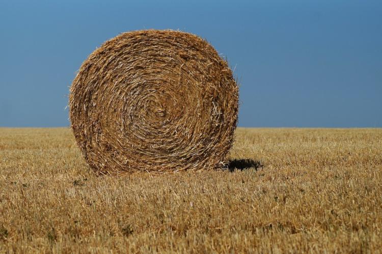 Die Landwirtschaft in der Steiermark hatte in den letzten Wochen mit enormer Trockenheit zu kämpfen.