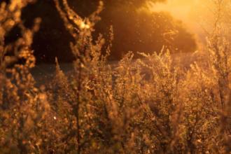 Eine blühende Wiese mit Gräsern - eigentlich traumhaft schön, doch für Allergiker die reine Hölle