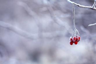Die Eisheiligen 2019 stehen bevor. Temperaturen unter dem Gefrierpunkt wird es jedoch -Zumindest in Wien - nicht geben.