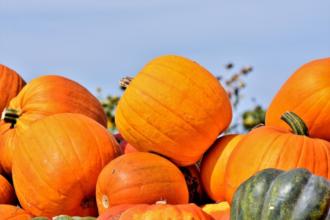 Die Frucht des Septembers - Der Start der Kürbissaison