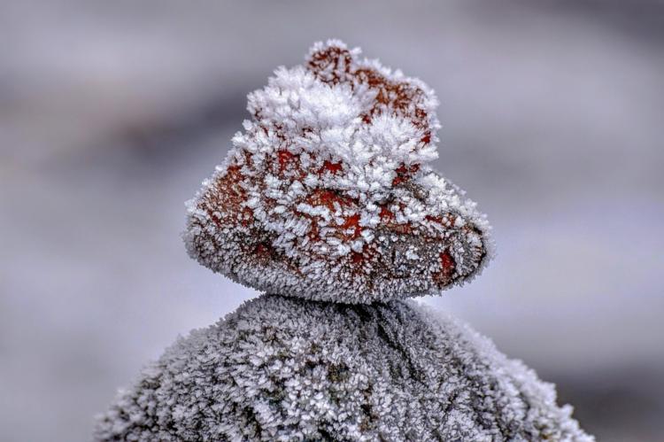 Raureif - Dieses Phänomen kann oft in den Morgenstunden von Frosttagen beobachtet werden!