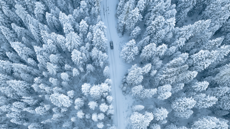 Diese Bäume müssen nicht mit Schnee bedeckt sein. An Eistagen hält sich Raureif oft sehr lange.