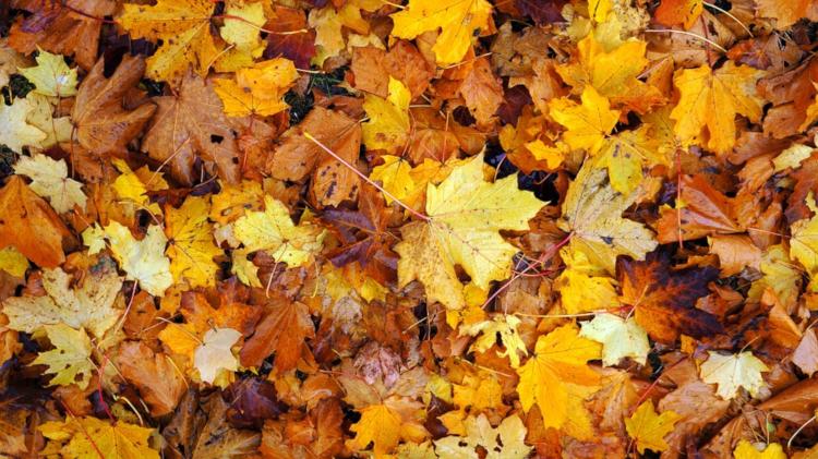 Herbst - Die Jahreszeit des bunten Laubes.