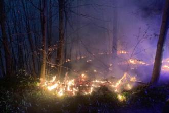 Waldbrand bei Klosterneuburg am Abend des 05.April 2020. Quelle: FF Klosterneuburg