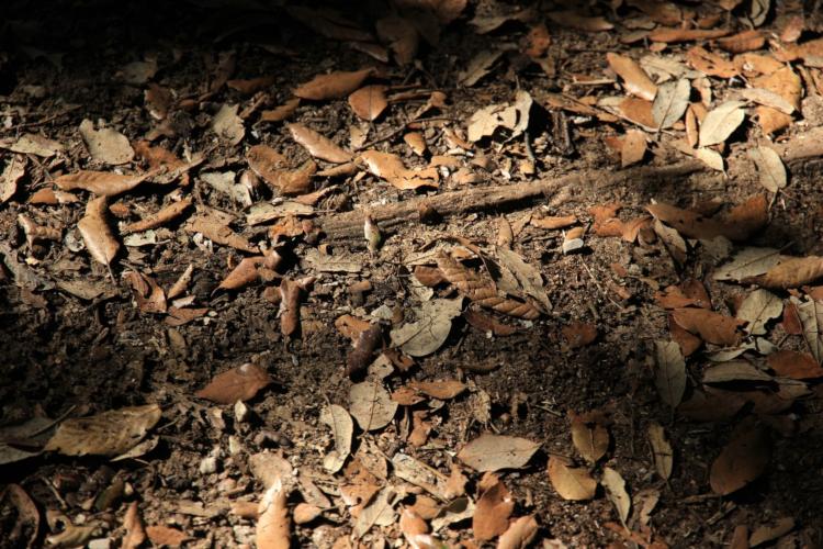 Das Resultat der letzten Wochen: Ausgetrockneter Waldboden macht das Leben für Fauna und Flora schwer.