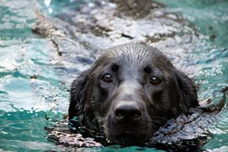 Hundstage - Nicht nur Hunde finden im kühlen Nass die ersehnte Abkühlung.