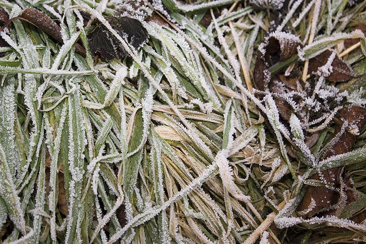 Taupunkt: Grashalme mit gefrorenem Tau; Foto: wetter-wien.wien