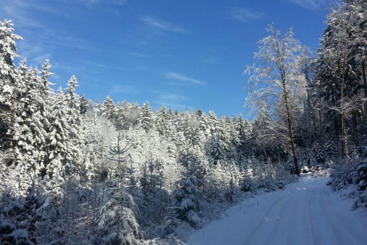 Schnee; Foto: wetter-wien.wien